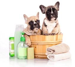 dog grooming landheim
