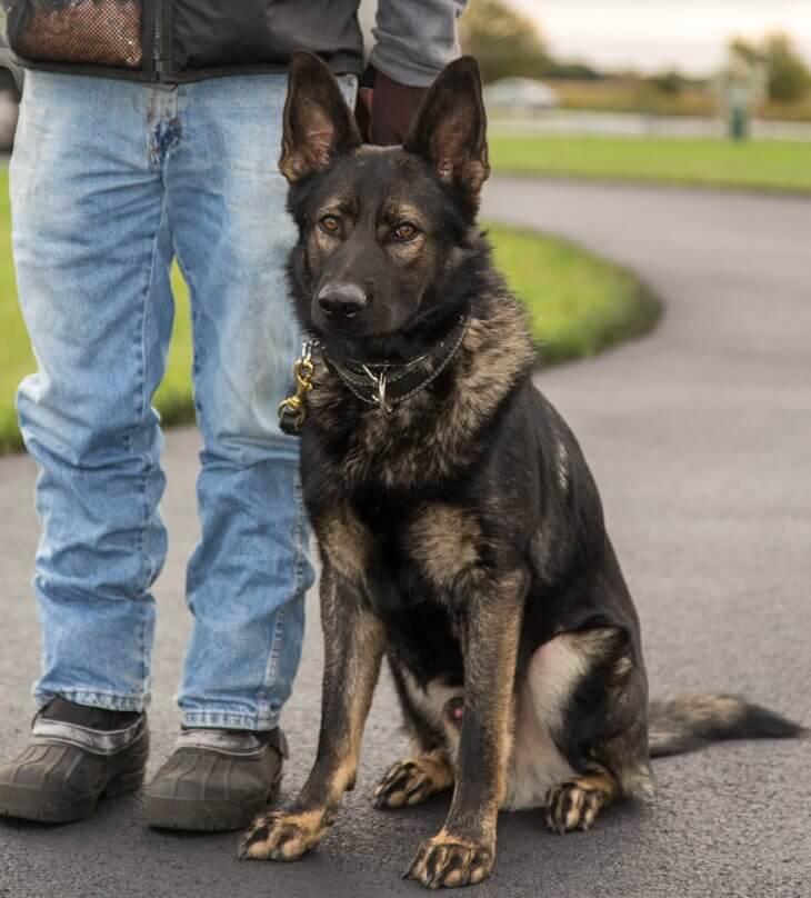 Dog training services - dog sitting