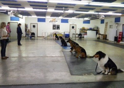 basic dog training class