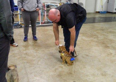 Private Dog Training Classes for all dogs