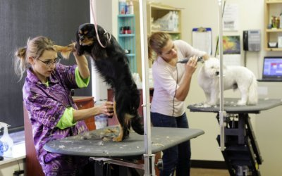 5 Benefits of Professional Dog Grooming