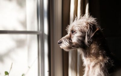 5 Dog Separation Anxiety Solutions To Help Your Dog Before Boarding