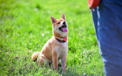 Basic Obedience Training for Dogs: Everything You Need to Know